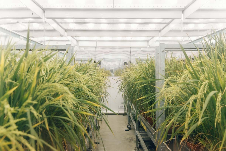 HID Lighting Plant Growth Room